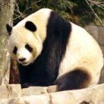 national animal of china