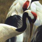 national bird of china