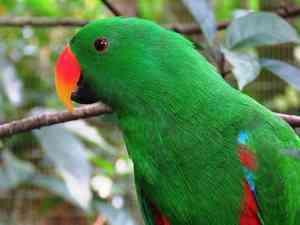 parrot essay my favourite bird favourite pet parrot parrots in ancient mythology parrot essay