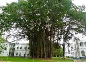 Autobiography of Banyan Tree