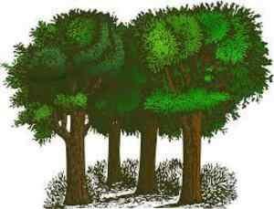 Short Speech on Save Trees for Children & Students
